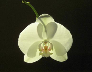 anne-de-meester-orchidee-in-de-avondzonweb