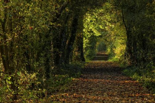 geert-vanhaverbeke-herfst-in-harchiesweb