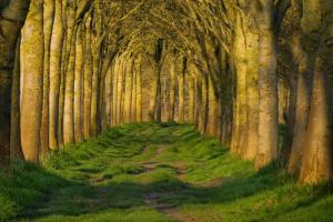 Geert Vanhaverbeke - Zonnige bomenweb