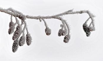 roger-lecoutre-winterweb