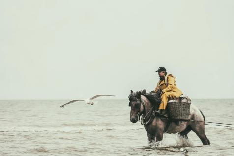 Paardenvissers_web