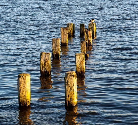 08 dec-Jan Ruysschaert - paaltjes in water-1_web