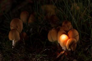 5-Nov-PeVy-Paddestoelen in de tuin - eentje is bewoond_web