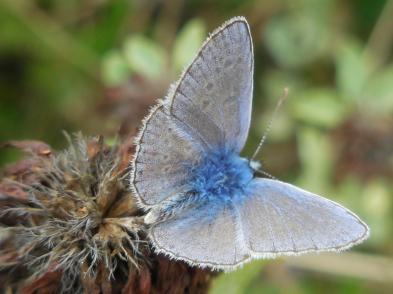 sept-PaVa-vlinder_web